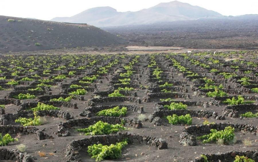 I vini di Lanzarote